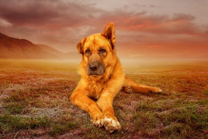 Composing Hund
