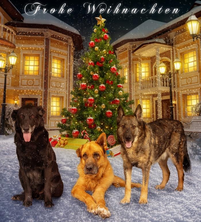 Hunde Weihnachstshooting