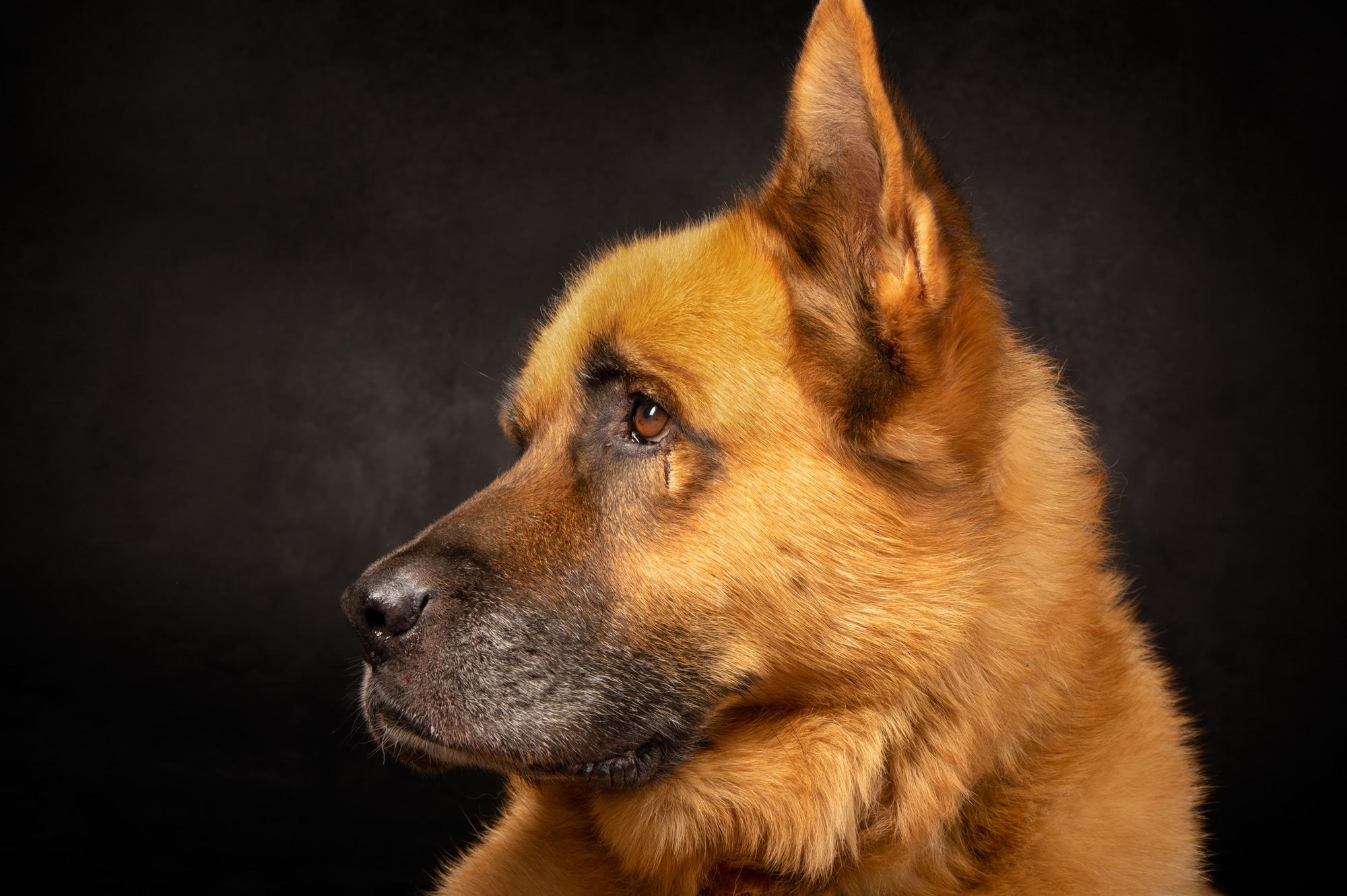 Hunde Potrait